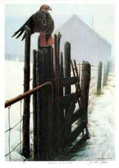 Borderline - Red Tailed Hawk-Michael Dumas-Limited Edition