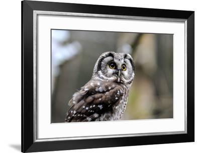 Boreal Owl-Reiner Bernhardt-Framed Photographic Print