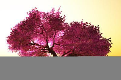 Mysterious Japanese Cherry Blossom Tree Sakura 3D Render