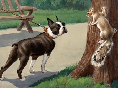 Boston Terrier Eyes a Nervous Squirrel-Walter Weber-Photographic Print
