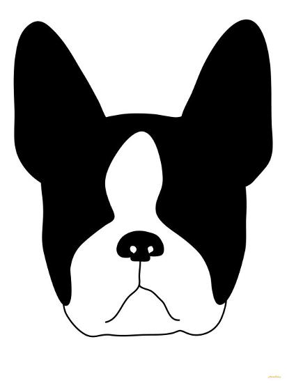 Boston Terrier-Avalisa-Art Print