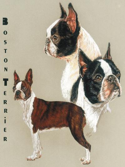 Boston Terrier-Barbara Keith-Giclee Print