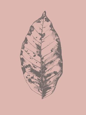 https://imgc.artprintimages.com/img/print/botanica-1_u-l-q1g6bfb0.jpg?p=0
