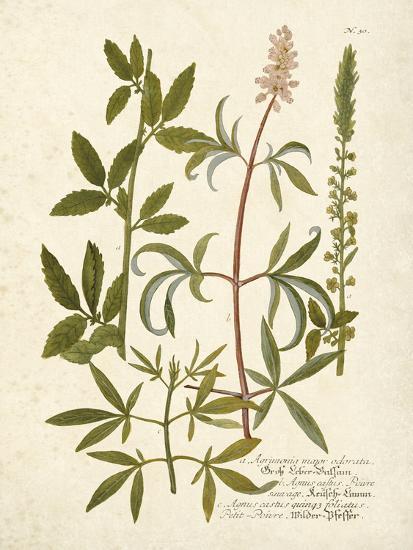 Botanica Agrimonia-The Vintage Collection-Art Print