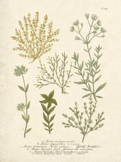 Botanica Alsine-The Vintage Collection-Art Print