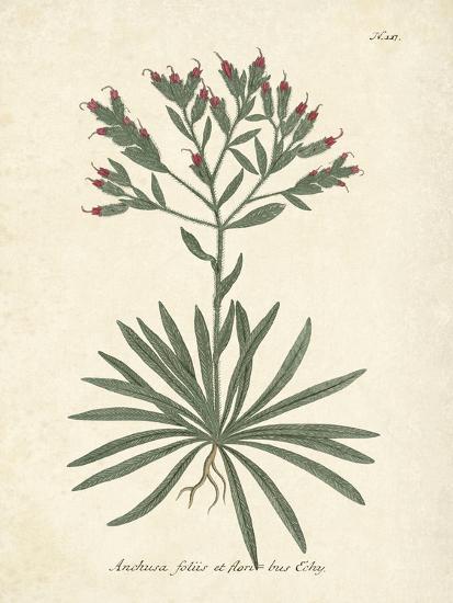 Botanica Anchusa-The Vintage Collection-Art Print