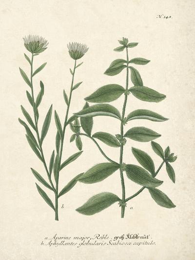 Botanica Aparine Major-The Vintage Collection-Giclee Print