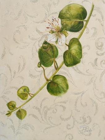 https://imgc.artprintimages.com/img/print/botanica-i_u-l-pwj8yh0.jpg?p=0