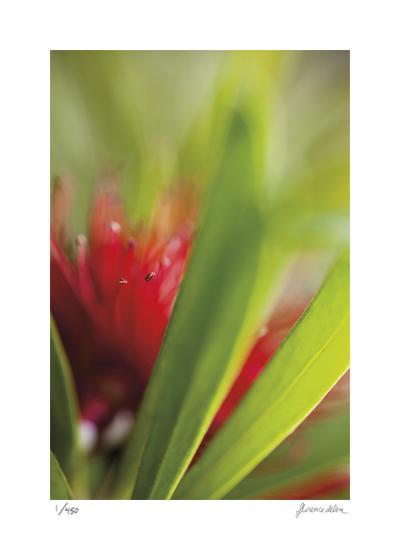 Botanical 1-Florence Delva-Limited Edition