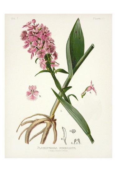 Botanical 2-Cynthia Alvarez-Art Print