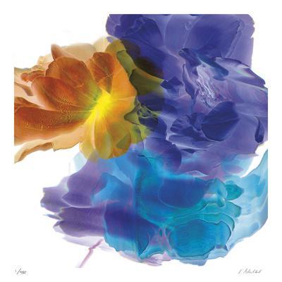 https://imgc.artprintimages.com/img/print/botanical-7_u-l-f8kois0.jpg?p=0