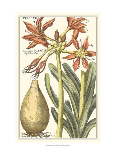 Botanical Beauty III-Vision Studio-Art Print