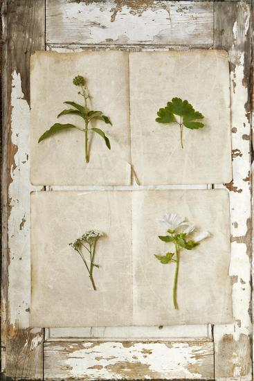 Botanical Board 1-Symposium Design-Giclee Print