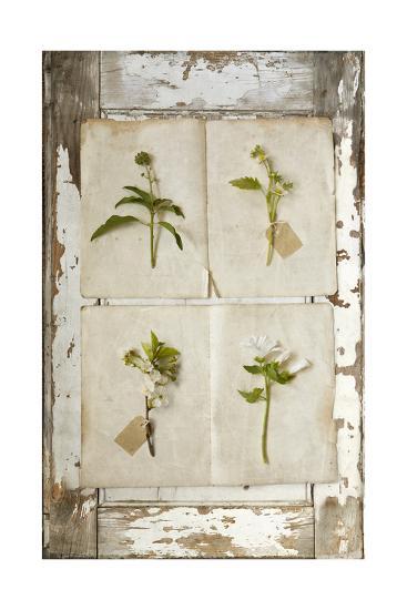 Botanical Board 2-Symposium Design-Giclee Print