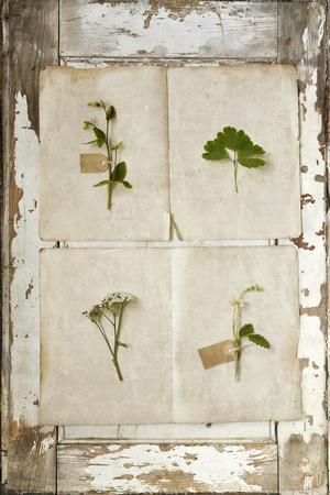 https://imgc.artprintimages.com/img/print/botanical-board-3_u-l-pynm1d0.jpg?p=0