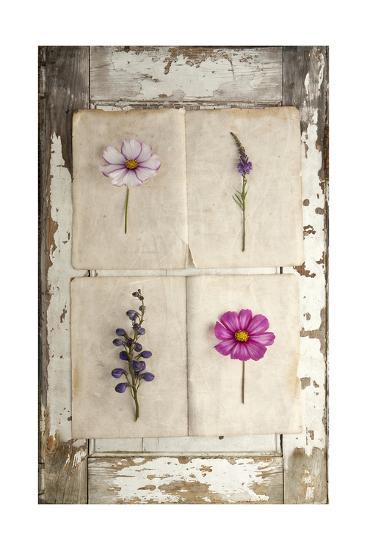 Botanical Board 4-Symposium Design-Giclee Print