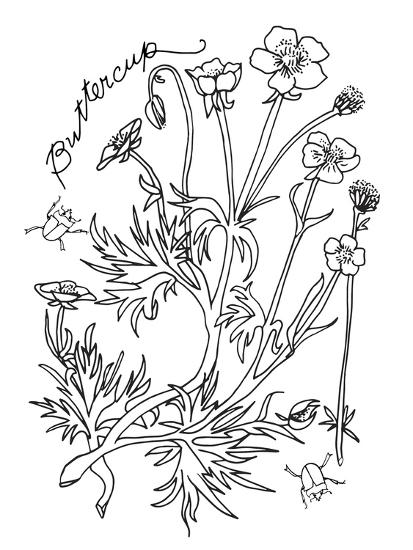 Botanical Buttercup BW for Coloring-Cyndi Lou-Giclee Print