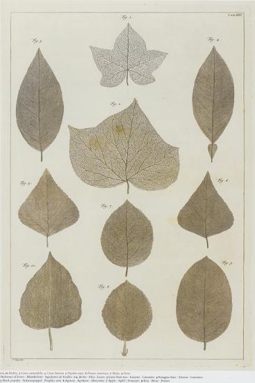 Botanical Deciduous Leaves I-Pieter Tanje-Giclee Print