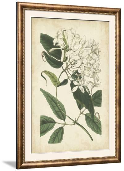 Botanical Display II-Vision Studio-Framed Photographic Print