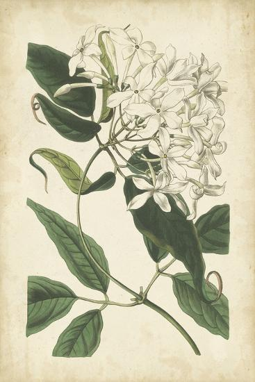 Botanical Display II-Vision Studio-Art Print
