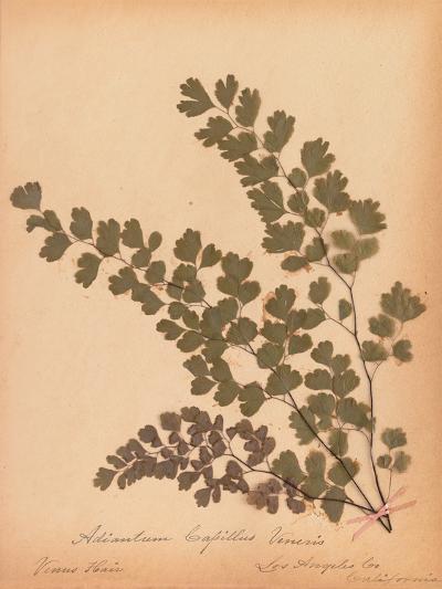 Botanical Fern III-Wild Apple Portfolio-Art Print