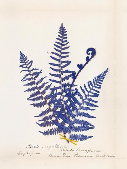 Botanical Fern IV Blue-Wild Apple Portfolio-Art Print