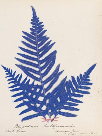 https://imgc.artprintimages.com/img/print/botanical-fern-xi-blue_u-l-q1ax3cc0.jpg?p=0
