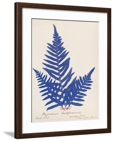 Botanical Fern XI Blue-Wild Apple Portfolio-Framed Art Print