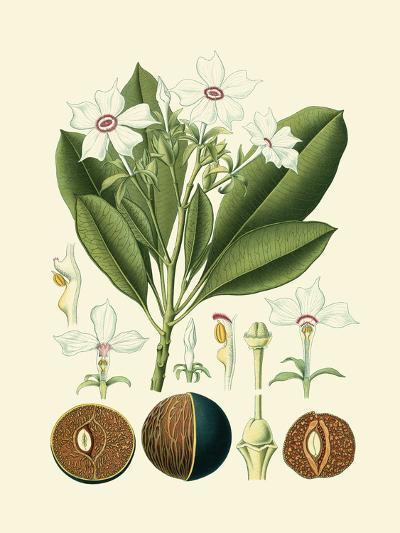 Botanical Glory IV-Vision Studio-Art Print