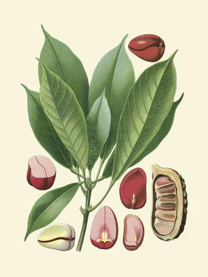 Botanical Glory VI-Vision Studio-Art Print