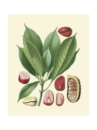 https://imgc.artprintimages.com/img/print/botanical-glory-vi_u-l-p8l9cb0.jpg?p=0