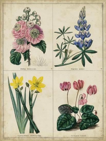 Botanical Grid III-Benjamin Maund-Art Print