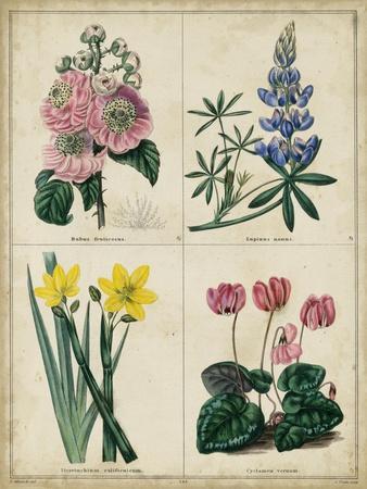 https://imgc.artprintimages.com/img/print/botanical-grid-iii_u-l-pyvr4h0.jpg?p=0