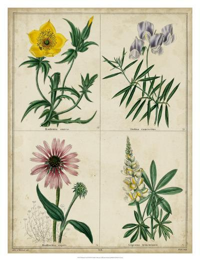 Botanical Grid IV-Benjamin Maund-Giclee Print