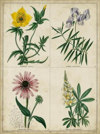 https://imgc.artprintimages.com/img/print/botanical-grid-iv_u-l-pyvr7u0.jpg?p=0