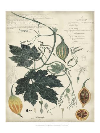 https://imgc.artprintimages.com/img/print/botanical-i_u-l-pfr7kv0.jpg?p=0