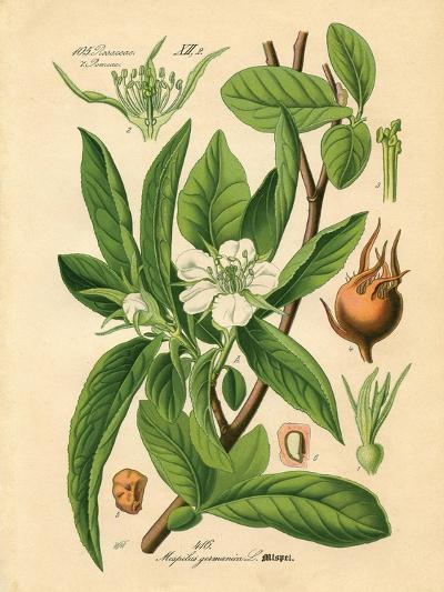 Botanical I-N^ Harbick-Art Print