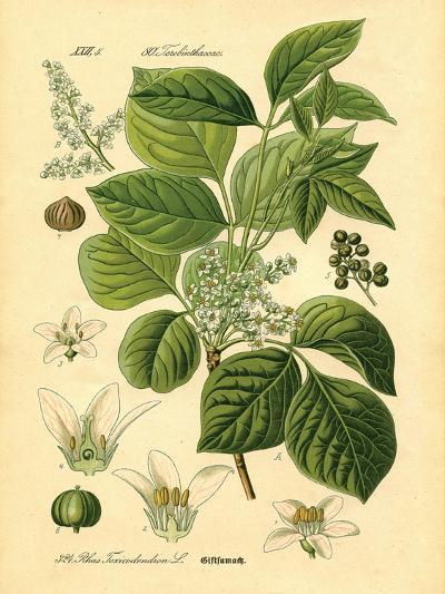 Botanical II-N^ Harbick-Art Print