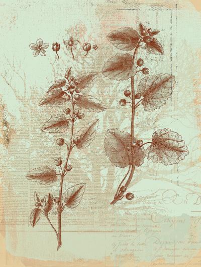 Botanical III-Ken Hurd-Art Print