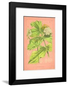 Botanical Illustration on Pink