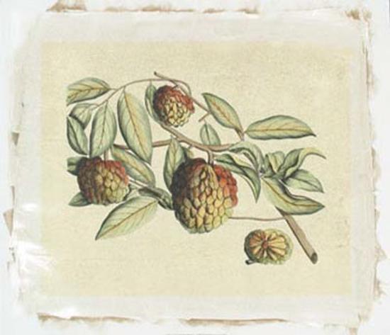 Botanical IV-Van Rheet-Premium Giclee Print