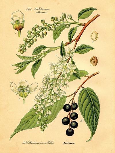 Botanical IV-N^ Harbick-Art Print