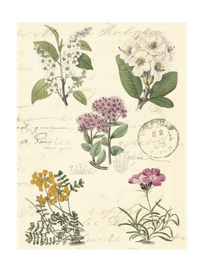 Botanical Journal II-Vision Studio-Art Print