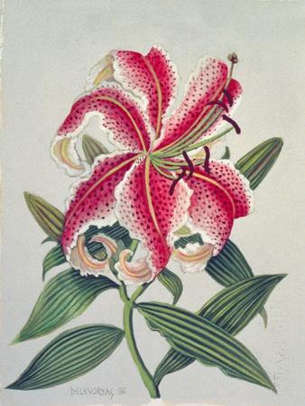 https://imgc.artprintimages.com/img/print/botanical-lily-1996_u-l-pjcran0.jpg?p=0