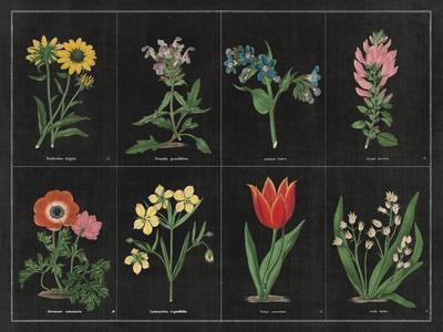 https://imgc.artprintimages.com/img/print/botanical-on-black-chart-i_u-l-q11qckv0.jpg?p=0