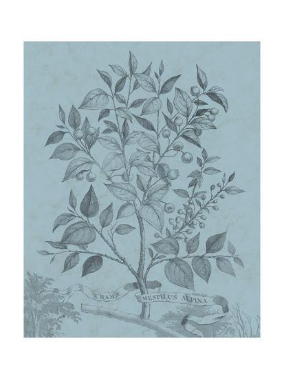 Botanical on Teal V-Vision Studio-Art Print