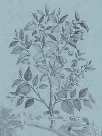 https://imgc.artprintimages.com/img/print/botanical-on-teal-v_u-l-q1blduk0.jpg?p=0