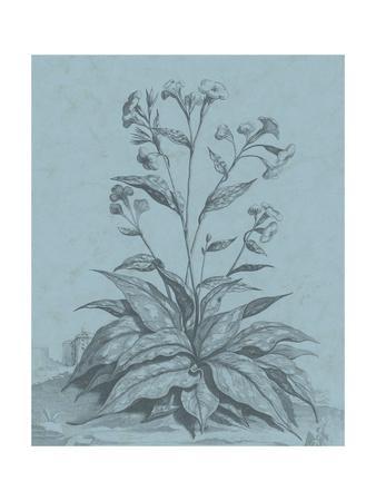 https://imgc.artprintimages.com/img/print/botanical-on-teal-vi_u-l-q1bldnv0.jpg?p=0