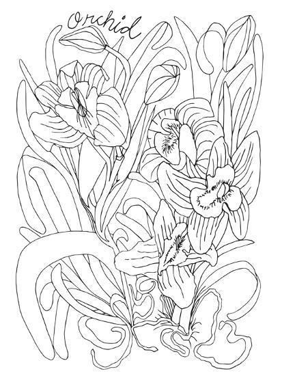 Botanical Orchid BW for Coloring-Cyndi Lou-Giclee Print