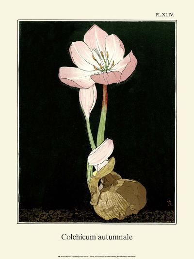 Botanical Print, Autumn Crocus, 1905-Luite Klaver-Art Print